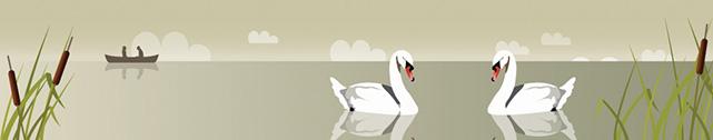 header-swans